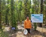 SOP Phú Mỹ triển khai dự án khảo nghiệm FERTISOP trên cây hồ tiêu