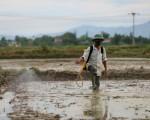'Việt Nam cần giảm 30% lượng dùng thuốc bảo vệ thực vật'