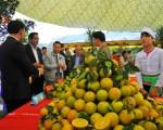 Phát triển cây ăn quả có múi: Không để vượt tầm kiểm soát