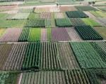Người nông dân khóc ròng vì mất trắng vụ thu hoạch