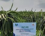 SOP Phú Mỹ triển khai dự án khảo nghiệm FERTISOP trên cây thanh long