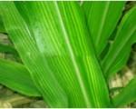 Vai trò của lưu huỳnh đối với cây trồng