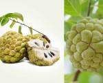 Quy trình bón phân cho cây Mãng cầu ta (Annona squamosa)